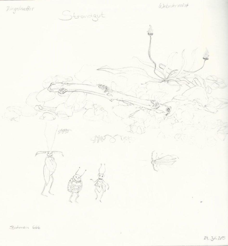 Strandgut- Zeichnung (Atelier am See, 07-2015)