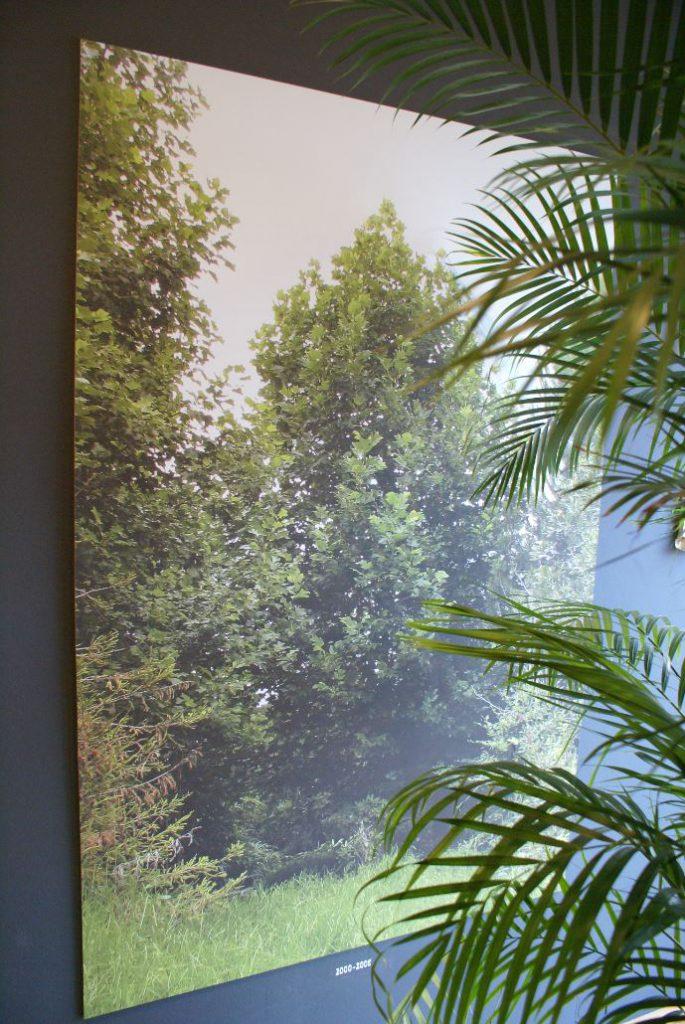 Friedenreich Hundertwassers Baum (* 2000 - 2008)