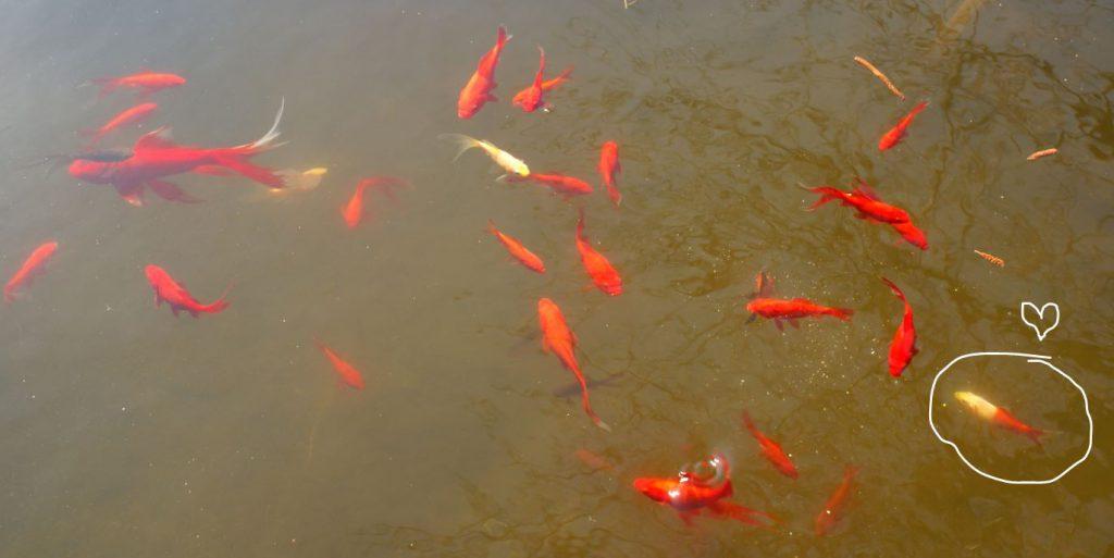 Viele-viele-bunte-Fische-2018-04-06