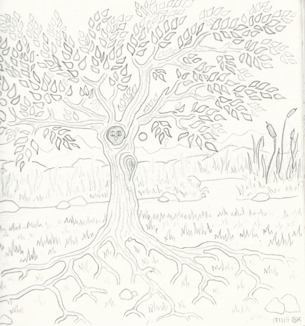 Eulenbaum am großen Teich - Zeichnung (Atelier am See, 11-2015)